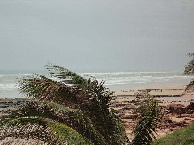 palm trees waving in the wind at Cable Beach during Cyclone Rusty
