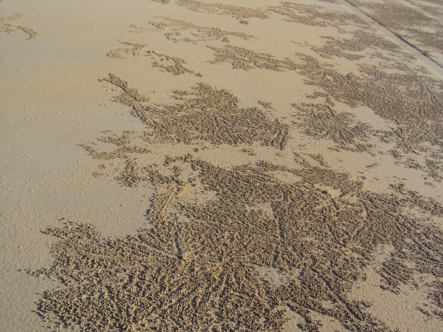 excavated crab balls on Cable Beach