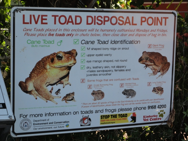 Cane toad disposal point