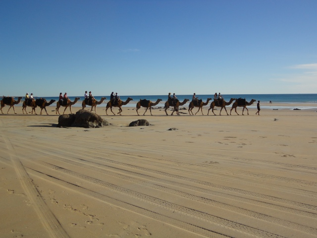 camel rides, few passengers missing, it's Raceday ...