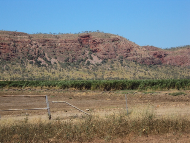 irrigating the northern food bowl. Sugar cane near Kununurra