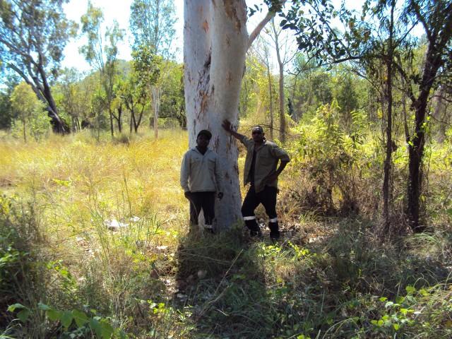 indigenous rangers leaning on a Salmon Gum, Eucalyptus bigalerita