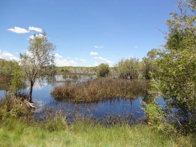 willies creek 010