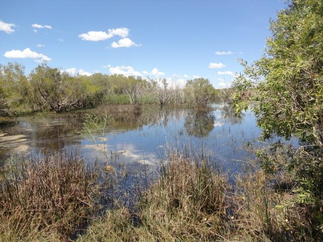 willies creek 011