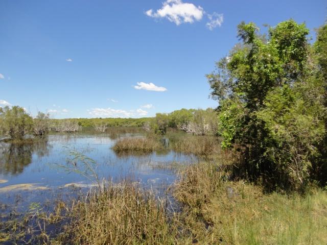 willies creek 012