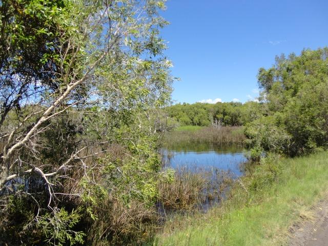 willies creek 013