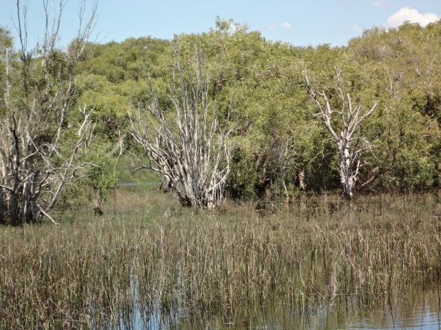 willies creek 015