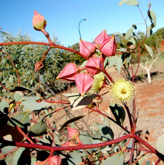 Indigenous plants - 0171