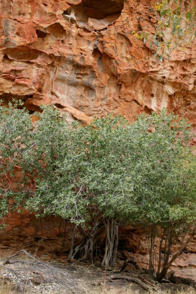 Indigenous plants - 0584
