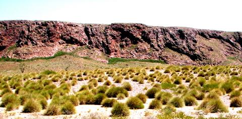Indigenous plants - 0880