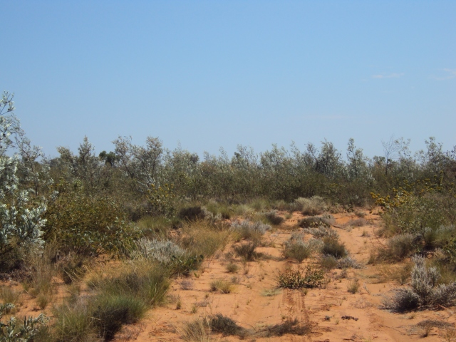 Great Sandy Desert