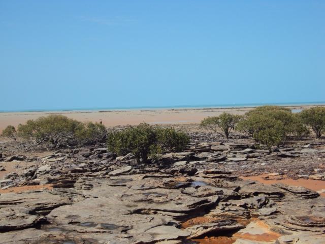 Dinosaur footprints embedded in sandstone. At low tide ...
