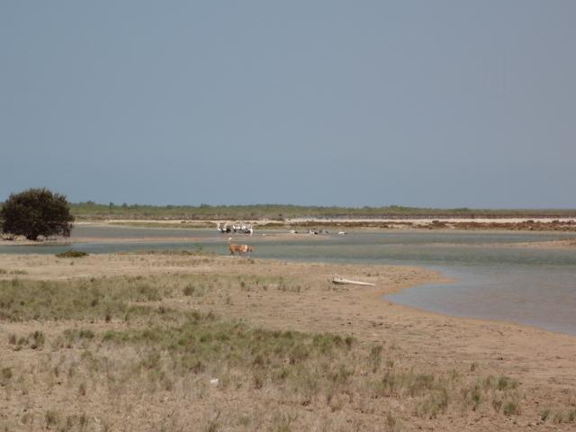 barred creek 039