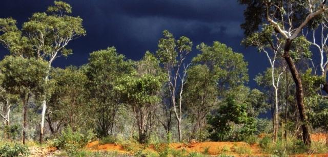 Thunderstorms, adding nitrogen to the soil