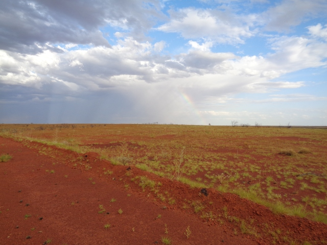 Spinifex recovering from an earlier fire