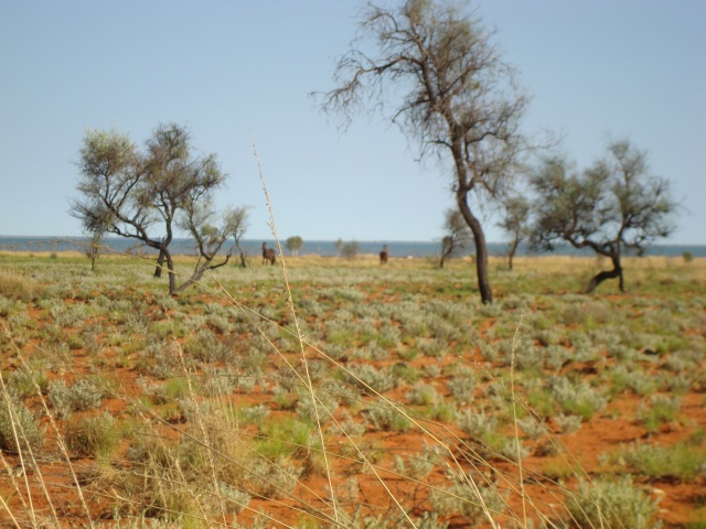 mulan-halls-creek-204