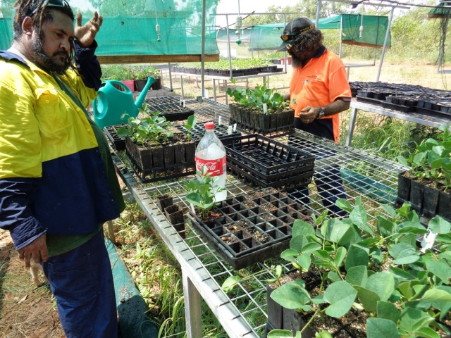 damian-spratt-and-patrick-spratt-prepare-seedlings-for-green-army-projects