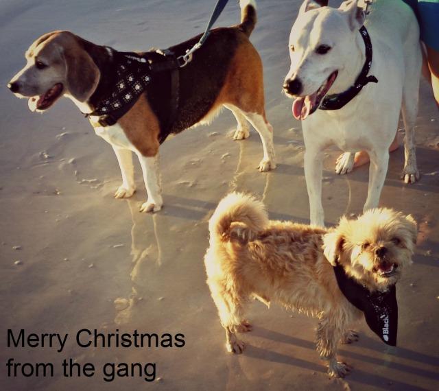 merry-gang