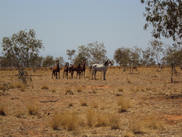 mulan-halls-creek-047